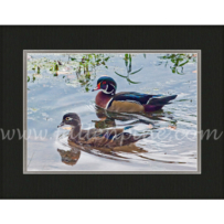 Arkansas Wood Duck2 SP-129