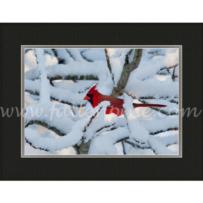 Cardinal Snowy Blanket SP-143