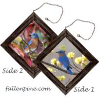 Bluebird in Fall and Spring Mini