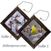 American Goldfinch in Spring & Winter