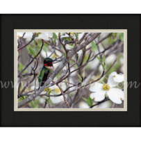 Hummingbird Perch 3 SP-157