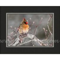 Female Cardinal Winter SP-50