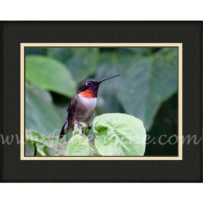 Ruby Throated Hummingbird SP-74