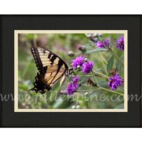 Tiger Swallowtail SP-68