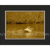 Heber Winter Swan 6 Sepia SP-30